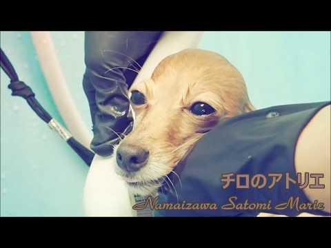 トリミング【お風呂タイム】Bathing a dog