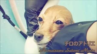 History: 私がトリマーになったのは1匹の犬がきっかけでした。 それは愛...