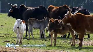 Reportage - Les animaux de la 8 - Holy' Day Ranch