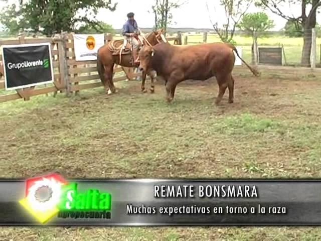 Salta Agropecuaria 285. Bloque 1 Videos De Viajes