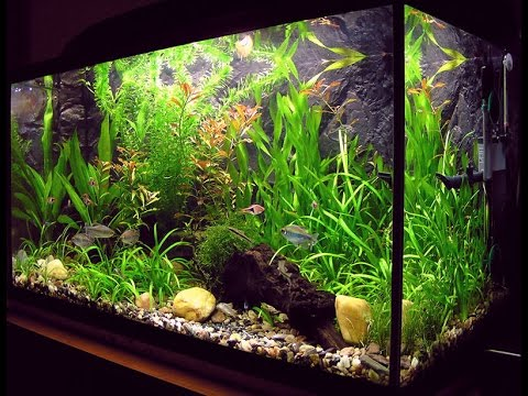 how to make a very simple aquarium at home youtube