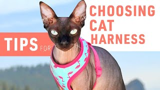 Choosingthe RightHarnessfor YourCat   Sphynx cat 101