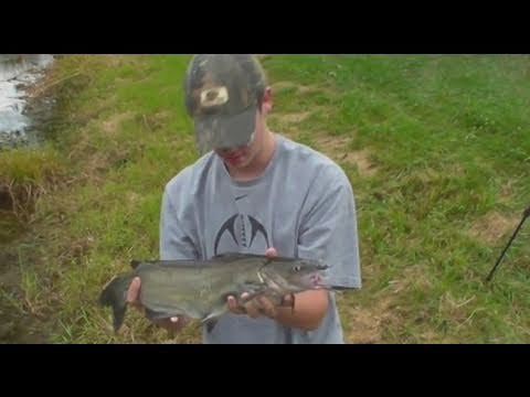 Catfish: From Pond To Frying Pan