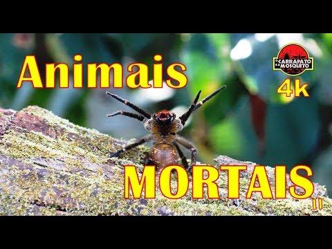 animais-mais-perigosos-do-mundo