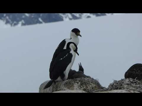 Antarctica Cruise