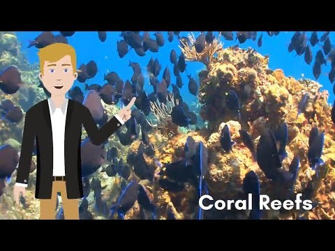 Reef Coin - Saving The Coral Reefs One Block At A Time - A Blockchain Cryptocurrency