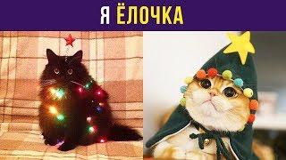 Приколы с котами. Я ёлочка! | Мемозг #61