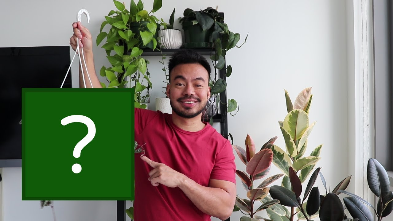 Meet My New-ish Plants | Not Really A Houseplant Haul