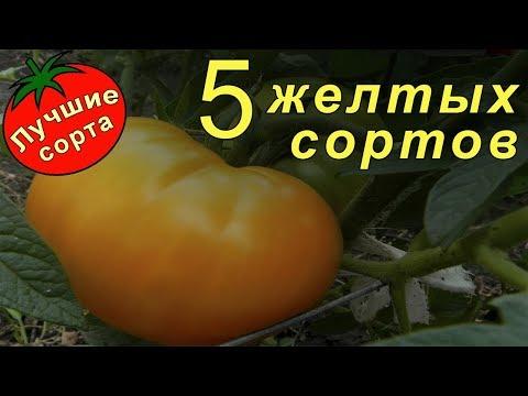 Желтые томаты (Лучшие сорта томатов) | помидоры | томатов | помидор | медовый | томаты | семена | лучшие | желтый | желтые | томат