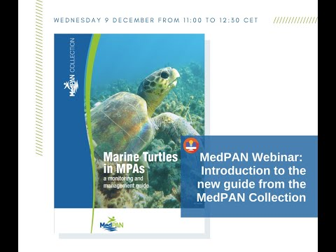 Webinar - Marine Turtles in MPAs: a monitoring and management guide