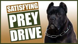 Dog Training 101! How To Satisfy Your Dogs Prey Drive!