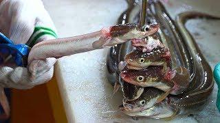 Korean Fish Market - Sea Eel Cutting Skill