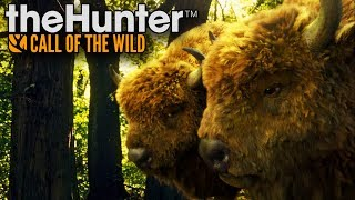 WYPRAWA PO DWA SZYBKIE ŻUBRY! - theHUNTER: Call of the Wild [PL/HD]