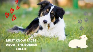 Getting To Know Your Dog's Breed: Border Collie Edition