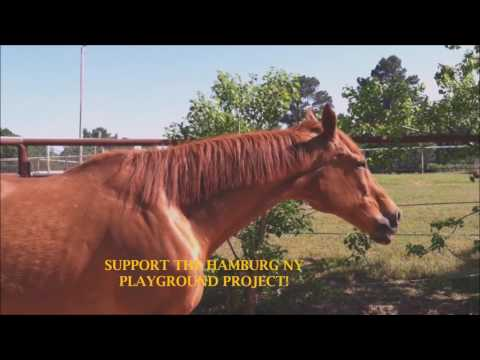 "Kirby ""THE TALKING HORSE""_ Hamburg NY Playground Project Promotion- 3"