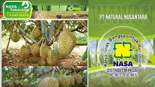 Cara Merangsang Pohon Durian Agar Cepat Berbuah