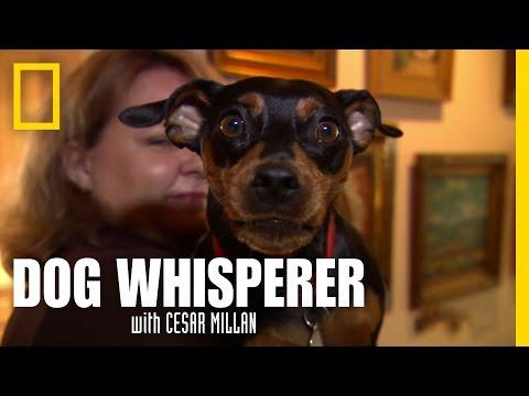 My Bark is Worse Than My Bite | Dog Whisperer