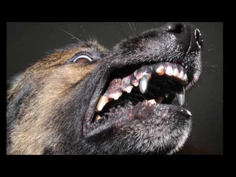 dogs with titanium teeth