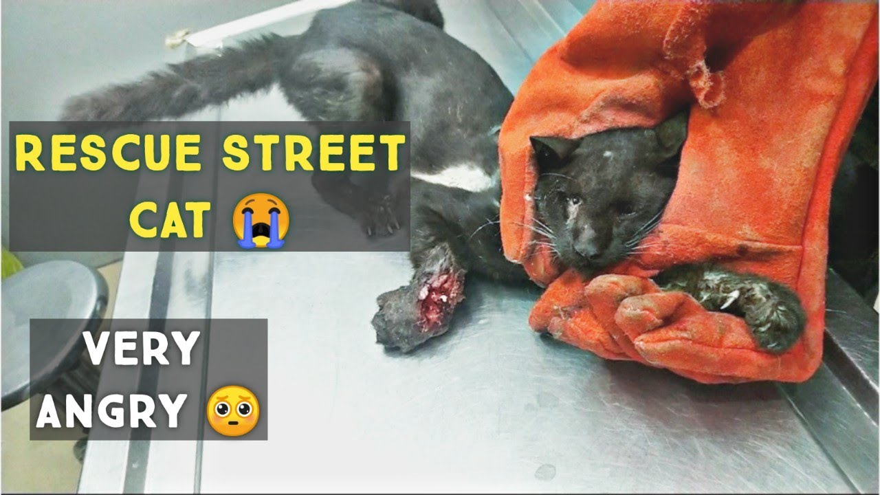 Street Cat Rescue : Rescued a very angry Cat with broken leg and in very Bad condition