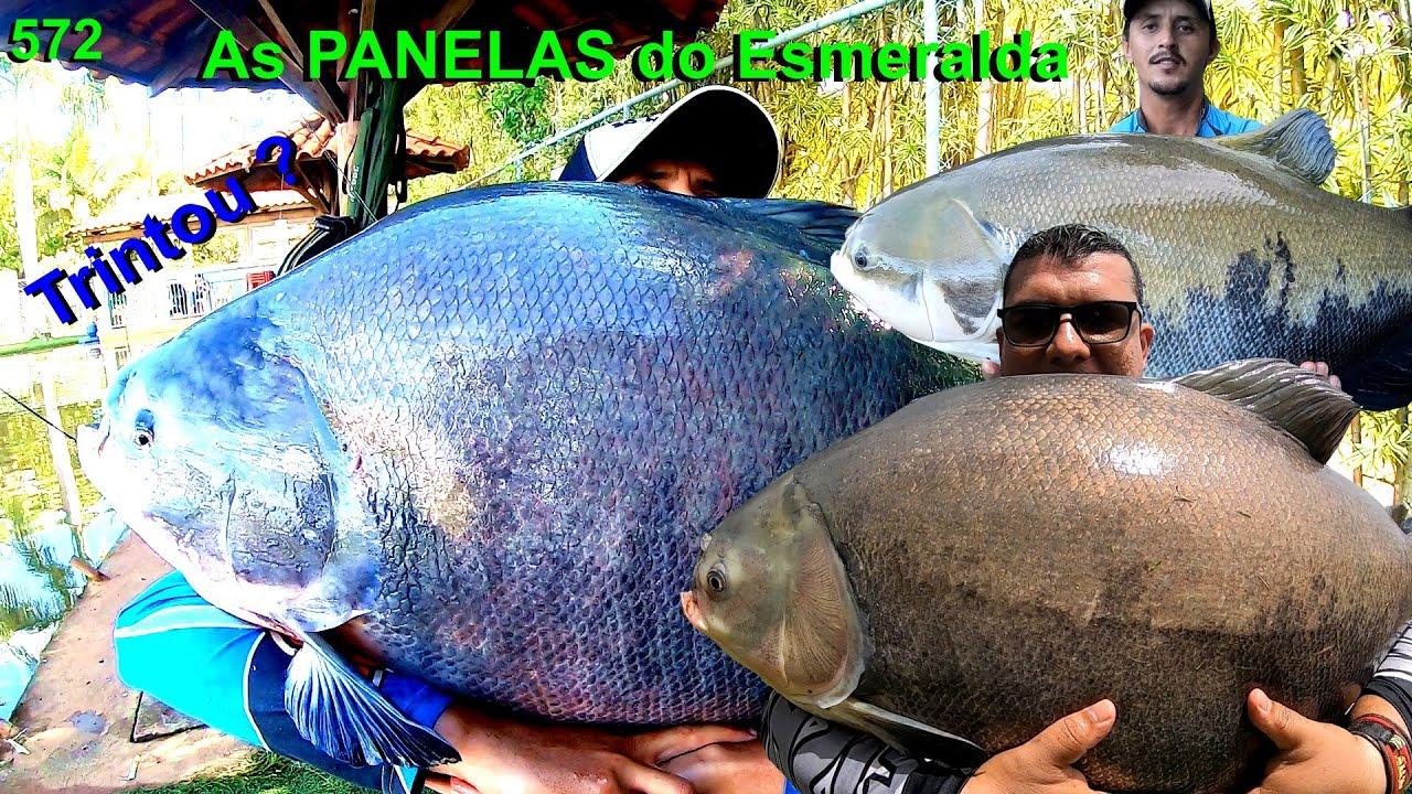 Esmeralda - Pescaria com grandes tambas na superfície e peixes de couro - Programa 572