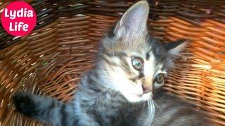 ДОМАШНИЕ ЖИВОТНЫЕ Первое домашнее животное Кот Микс