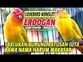Andika Bjb Cup Erdogan Lovebird Makasar Berhasil Taklukan Burung Ratusan Juta Milik Gema Toufan  Mp3 - Mp4 Download
