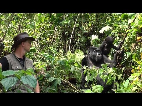 Gorilla Conservation With Rare Species Fund Takes a Community