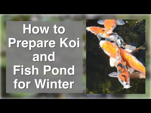 How To Prepare Koi Or Fish Pond For Winter