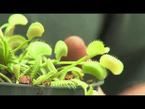 Equilibrio Carnivorous Plants Carnivorous Plants