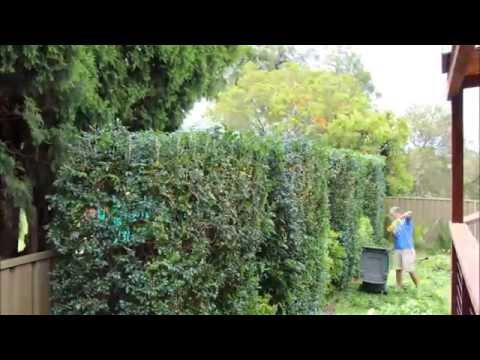 Hedge Timelapse