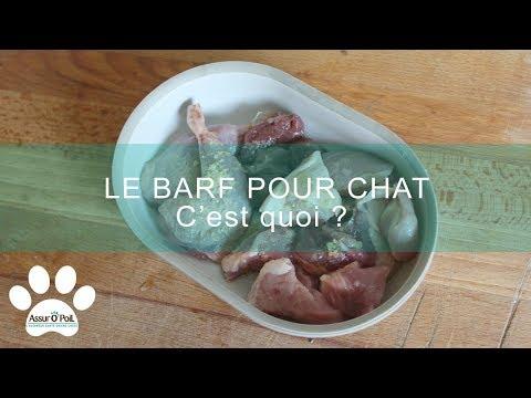 Nourrir Son Chat Au Barf : Avantages Et Inconvénients | Assur O'Poil