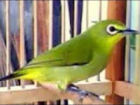 Manfaat Teh Daduzi Jaco Di Perkaya Buah Goji Berry from YouTube · Duration:  4 minutes 35 seconds