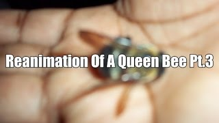 Reanimation of dead queen bee pt.3 The Dead Respond!