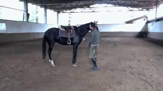 Francesco Vedani - cavallo che calcia e che non sta legato