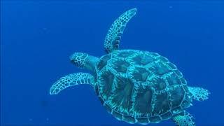 Dive at LEKUAN1 of Bunaken, Manado, Indonesia on Jan.12, 2018 thumbnail