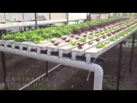 Hydroponic Urban Farm Melbourne