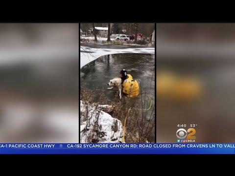 Rescata a un perro de un estanque de agua helada