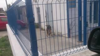Пес маньяк