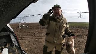Первая успешная Охота на зайца в 2021.Фильм тринадцатый Поля Кубани.