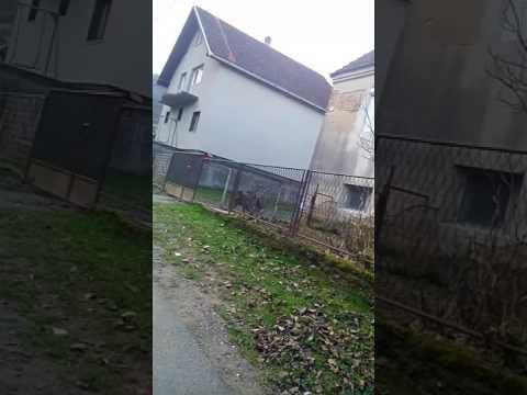 besplatno porno barn dvorište