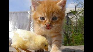 смешные видео с животными 2014