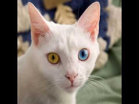 Video - भूखी बिल्ली - तेनालीराम की प्रेरक कहानी