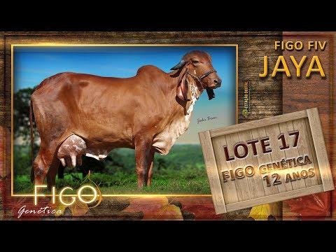 LOTE 17 - FIGO FIV JAYA - HCFG 1399