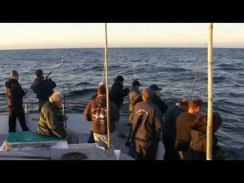 Pacific Islander Sportfishing - Channel Islands Sportfishing and Reel Anglers Fishing TV Show