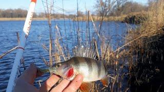 ЗИМНИЙ УЛЬТРАЛАЙТ ЛОВЛЯ ПАСИВНОГО ОКУНЯ Winter perch fishing