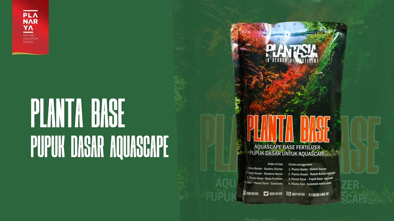 PLANTASIA - Planta Base