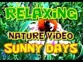Soothing Relaxing Nature Video
