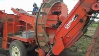 Kopanie ziemniaków 2011