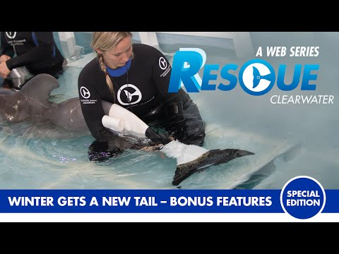 Winter Gets a New Tail - Rescue Clearwater Season 1 Bonus Episode