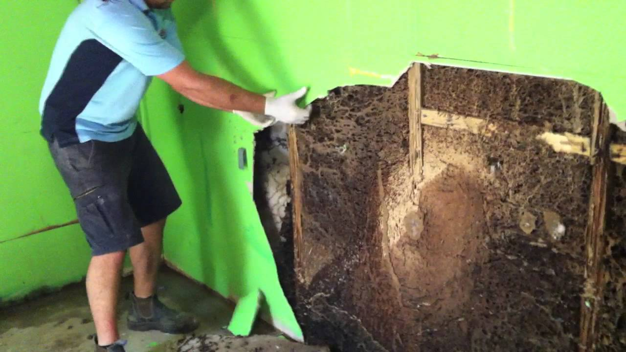 Forensic Pest Management Services Discovers A Massive